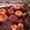 Продаем парагвайский персик из Испании - Изображение #8, Объявление #1406258