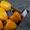продаем перец из Испании - Изображение #2, Объявление #1337540