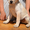 Щенки Лабрадора (КСУ) из питомника #1585225