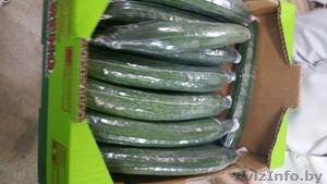 продаем огурцы из Испании - Изображение #3, Объявление #1406262