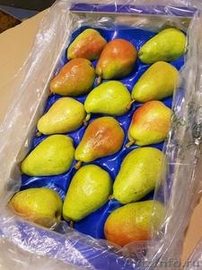 Продаю груши из Испании - Изображение #5, Объявление #1406266