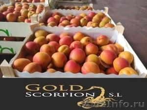 Продаем абрикос из Исапнии - Изображение #1, Объявление #1406259