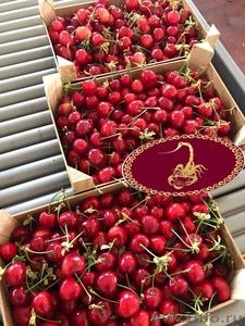 Продаем черешю из Испании - Изображение #4, Объявление #1366003