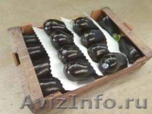 продаем баклажаны из Испании - Изображение #4, Объявление #1337547
