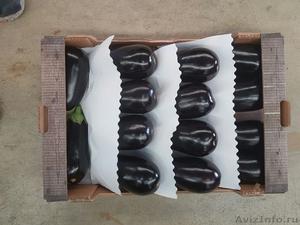 продаем баклажаны из Испании - Изображение #1, Объявление #1337547