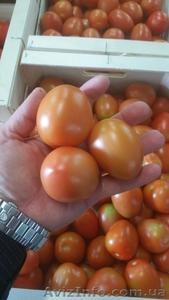 продаем томаты из Испании - Изображение #3, Объявление #1337546
