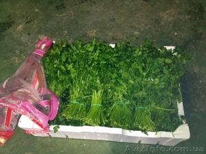 Продаем зелень из Испании - Изображение #4, Объявление #1406261