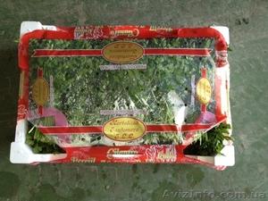 Продаем зелень из Испании - Изображение #5, Объявление #1406261