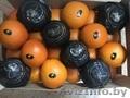 продаем апельсины из испании - Изображение #3, Объявление #1337539