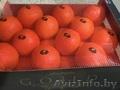 продаем апельсины из испании - Изображение #2, Объявление #1337539