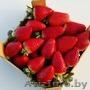 Продаем  клубнику из Испании - Изображение #6, Объявление #1366002