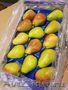 Продаю груши из Испании - Изображение #1, Объявление #1406266