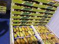 Продаю груши из Испании - Изображение #7, Объявление #1406266