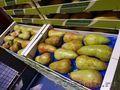 Продаю груши из Испании - Изображение #8, Объявление #1406266