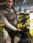 продаем лимон из Испании - Изображение #2, Объявление #1337537