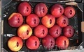 Продаем нектарины из Испании