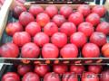 Продаем нектарины из Испании - Изображение #6, Объявление #1366005