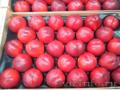 Продаем нектарины из Испании - Изображение #5, Объявление #1366005