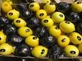 продаем лимон из Испании - Изображение #4, Объявление #1337537