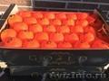 продаем мандарины из Испании - Изображение #2, Объявление #1337526