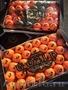 продаем мандарины из Испании - Изображение #6, Объявление #1337526