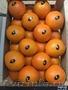 продаем апельсины из испании - Изображение #5, Объявление #1337539