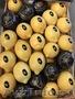 продаем лимон из Испании - Изображение #6, Объявление #1337537