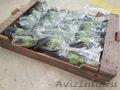 продаем баклажаны из Испании, Объявление #1337547