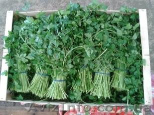 Продаем зелень из Испании, Объявление #1406261