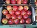 Продаем яблоки из Испании - Изображение #2, Объявление #1406263