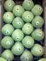 Продаем яблоки из Испании - Изображение #3, Объявление #1406263