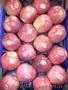 Продаем яблоки из Испании - Изображение #4, Объявление #1406263