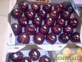 Продаем яблоки из Испании - Изображение #5, Объявление #1406263