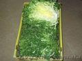 Продаем зелень из Испании - Изображение #3, Объявление #1406261