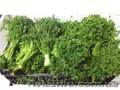 Продаем зелень из Испании - Изображение #6, Объявление #1406261